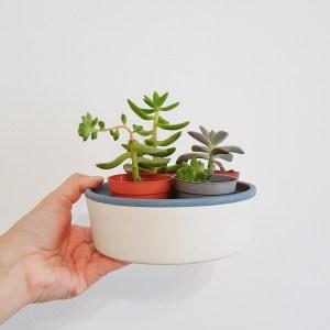 Zen dish with succulents