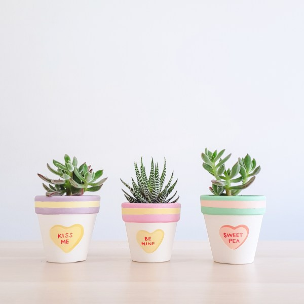 Kiss Me, Be Mine, Sweet Pea plant pots