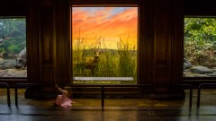 A little girl takes to playing jungle rather than observing the taxidermy animals of Africa.