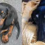 Tyler as a puppy in 2003, and on our last day together
