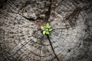 New plant growing from middle of dead tree stump | Trauma Recovery Counseling Services | Jennifer Levin | Therapy Heals | Pasadena, CA 91106