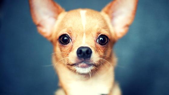 11 best miniature dog