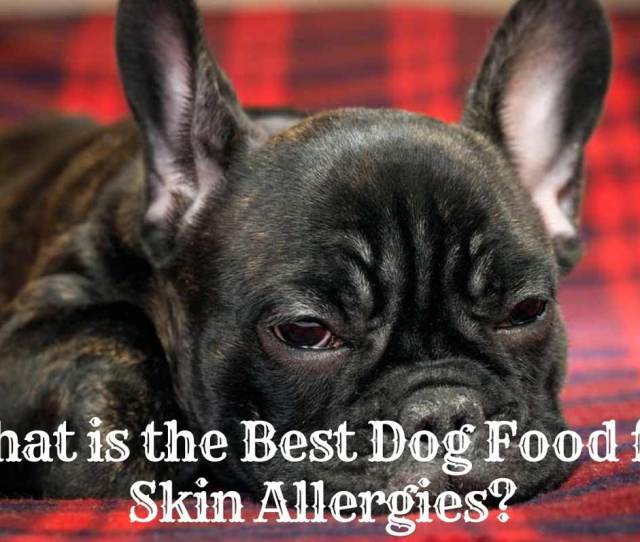 What Is The Best Dog Food For Skin Allergies
