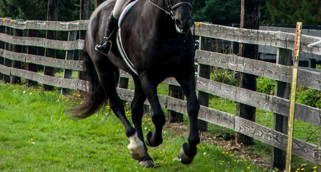 cantering-undersaddle-feature