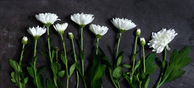white flower group.jpg