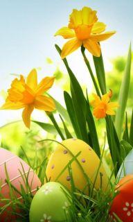 daffodilsandeggs
