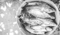 Nutritional benefits of fresh water fishes