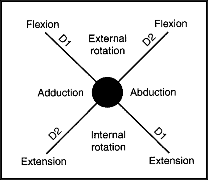 pnf patterns d1 d2 upper extremity summary. pattern which