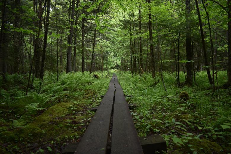 wood walkway in park