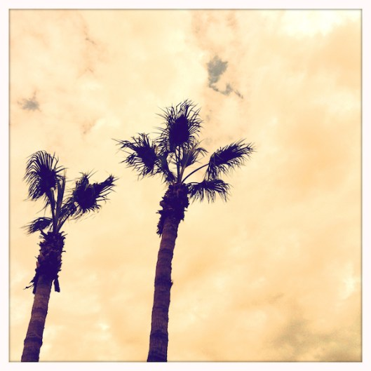 Arizona to California Road Trip, Palm Trees, Hipstamatic Photography