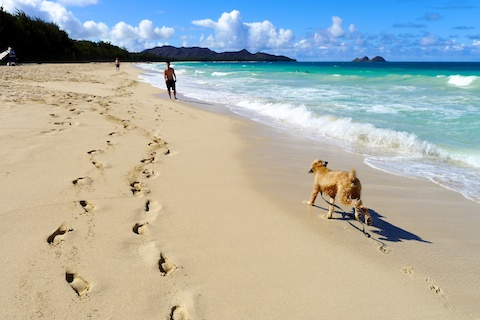 Hawaii beaches, thereafterish, beaches of Hawaii, world's best beaches, Sherwood Forest Beach