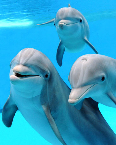 The Real Good Life Is A 2016 Dolphin Pool Finalist