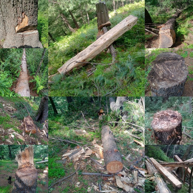 Opinion   The demolition of forests in Buffliaz- B!