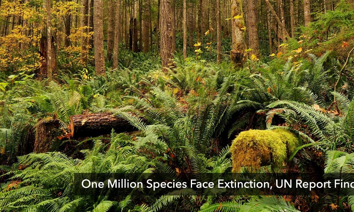 One Million Species Face Extinction, UN Report Finds