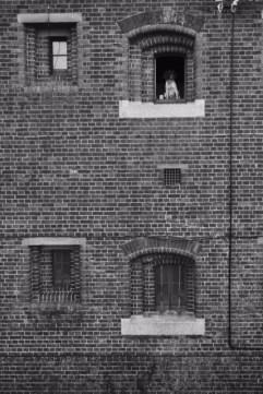 Window to the world. John Callaway [2016]