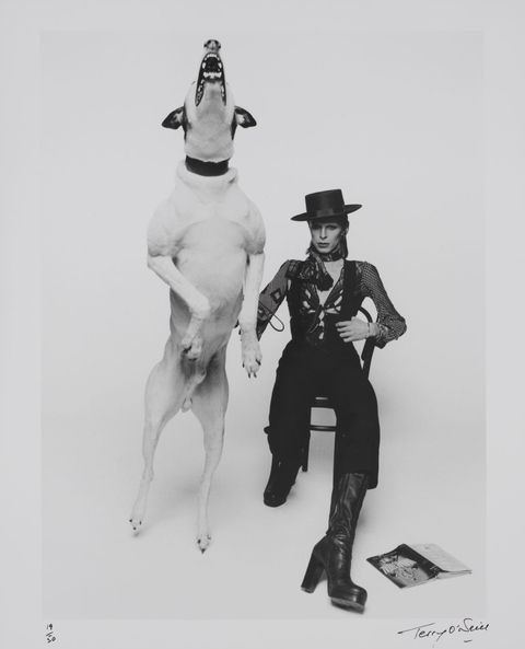 hbz-david-bowie-brooklyn-museum-promotional-photograph-of-david-bowie-for-diamond-dogs-1974-1507140913