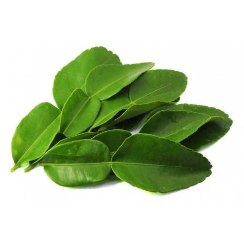 Curry Leaf - Onl;inerecipe.website