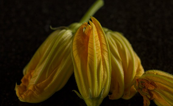 Zucchini flowers stuffed with goat's cheese