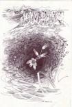 1 Mountain roots/recklessfruit1/janeadamsart