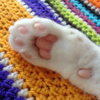 soft-kitty-toe-bean