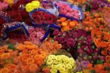 Colored Mini Roses