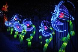 Light-Up Blue Flowers