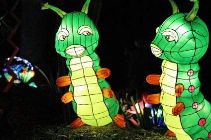 Caterpillar Lanterns