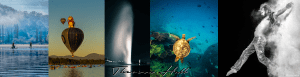 Seven images taken by Theresa Hall: underwater image of turtle swimming with coral and fish, Punga native to New Zealand, Captain Cook water jet in Canberra, balloons over Lake Burley Griffin, ring-tailed lemur with tail over his head, man on a canoe at sunrise on Lake Burley Griffin in Canberra, and fish, and man stepping out with cloud behind him.