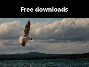 shop icon - free downloads - 324x 243 - seagull at Batehaven, New South Wales