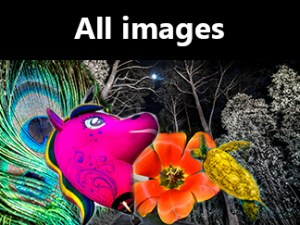 Composite of images by Theresa Hall.
