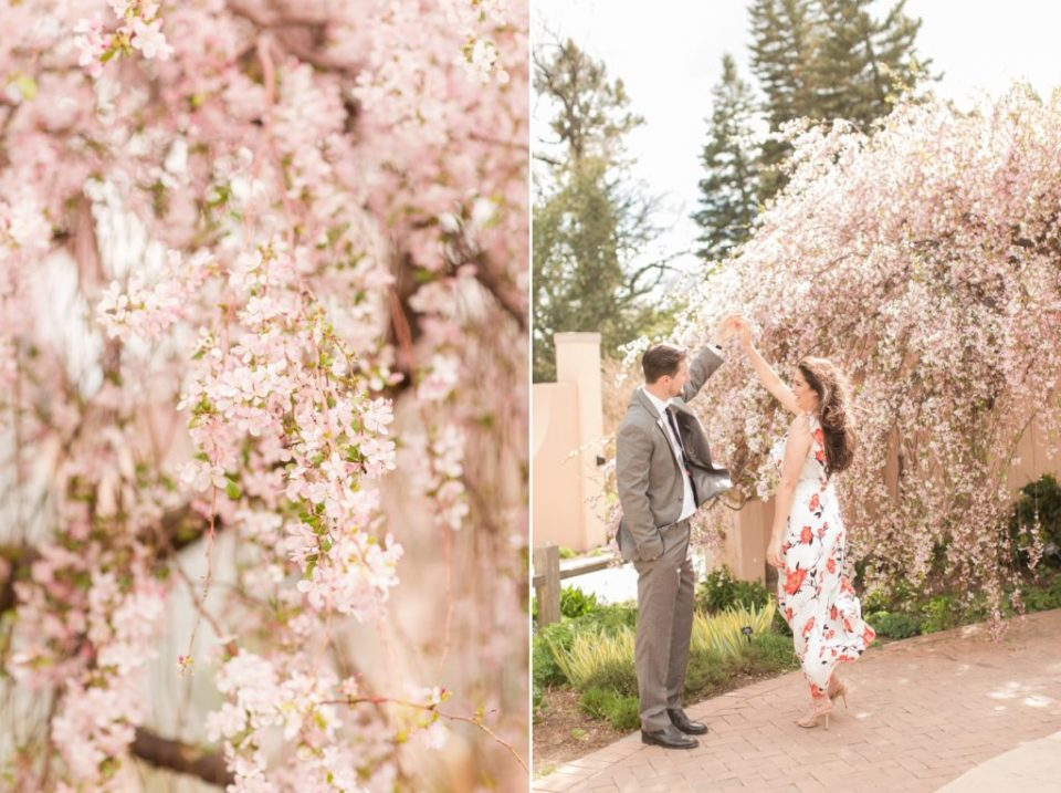 Bride and groom engagement session at Denver Botanical garden in cherry blossom