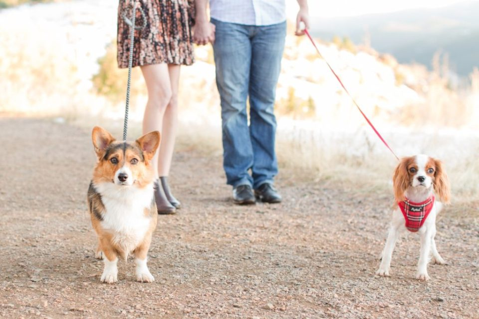 Engagement session with a corgi. Corgi engagement session in Colorado.