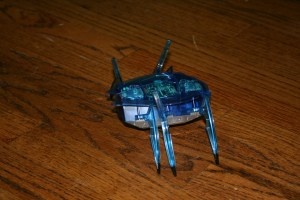 scarab toy
