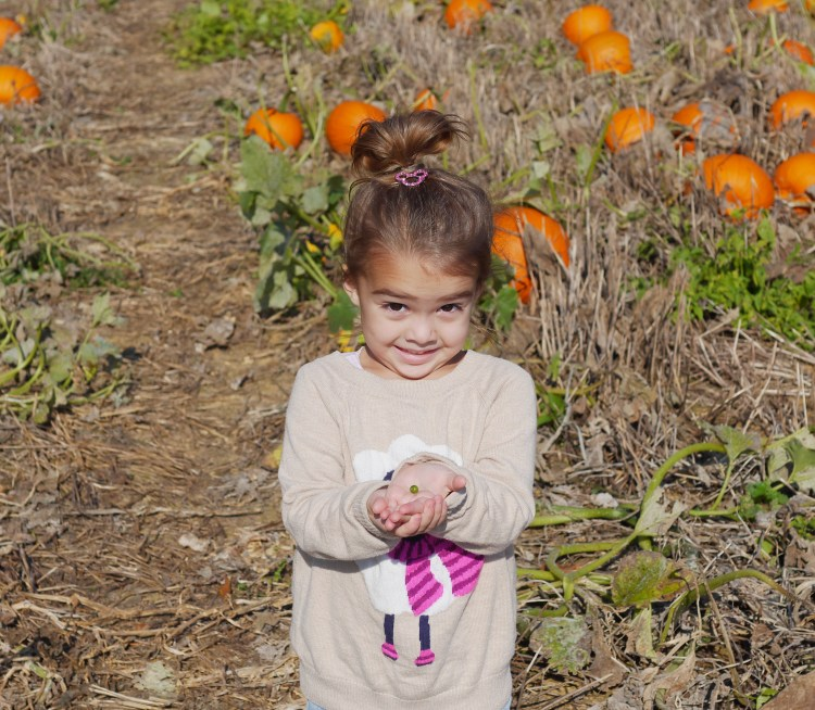 6 Reasons to Visit a Pumpkin Patch - Found on Theresa's Reviews - www.theresasreviews.com