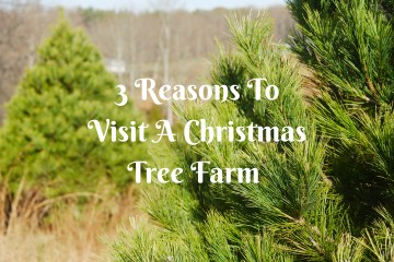 3 Reasons To Visit A Christmas Tree Farm