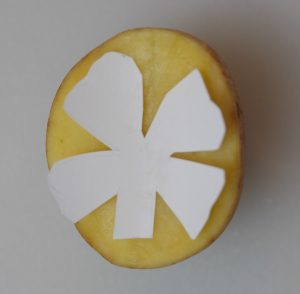 Creating a 4 leaf clover potato stamp for St. Patrick's day is simple to do. First, cut out the shape of the stamp in a piece of paper, and place it on the potato.