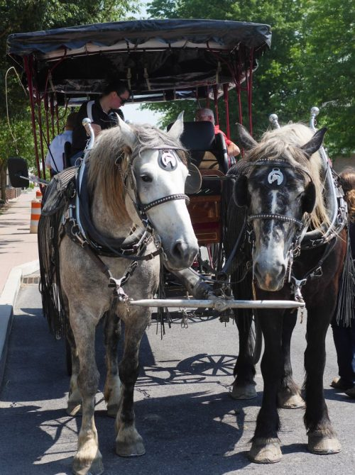 Adults and children can appreciate the views of the battlefield from a horse-drawn carriage.