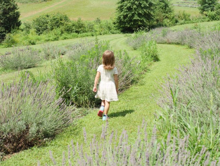 Theresa's Reviews visits Soleado Lavender Farm