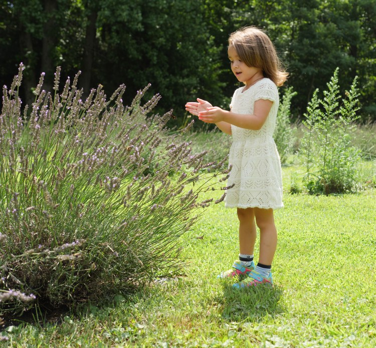 Child catching butterflies at Soleado Lavender Farm - Theresa's Reviews