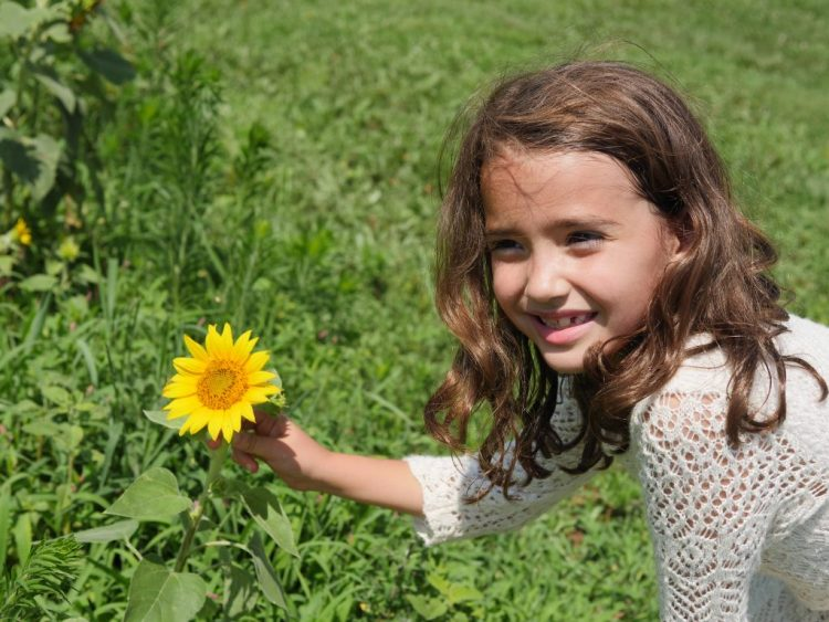 Child enjoying the sunflowers at Rocky Point Creamery in Frederick County, Maryland
