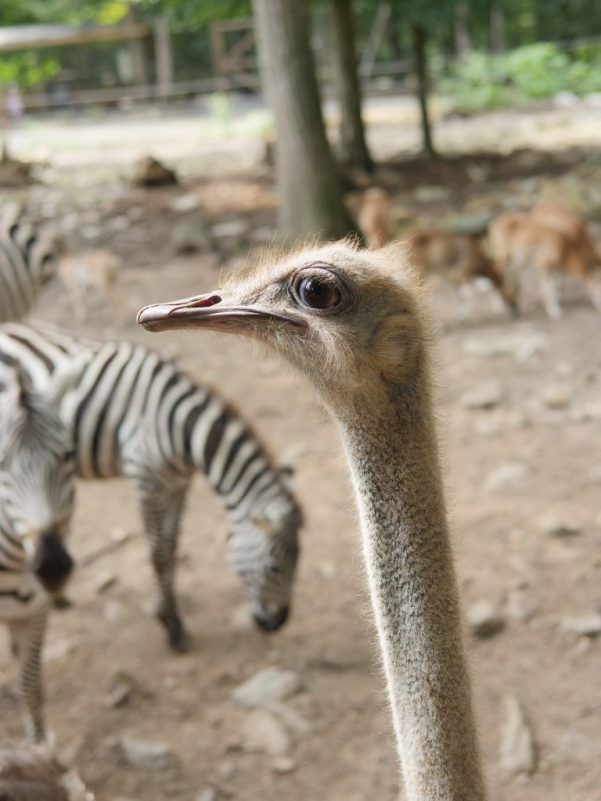 Take a safari ride at the Catoctin Zoo to get up close to exotic animals!
