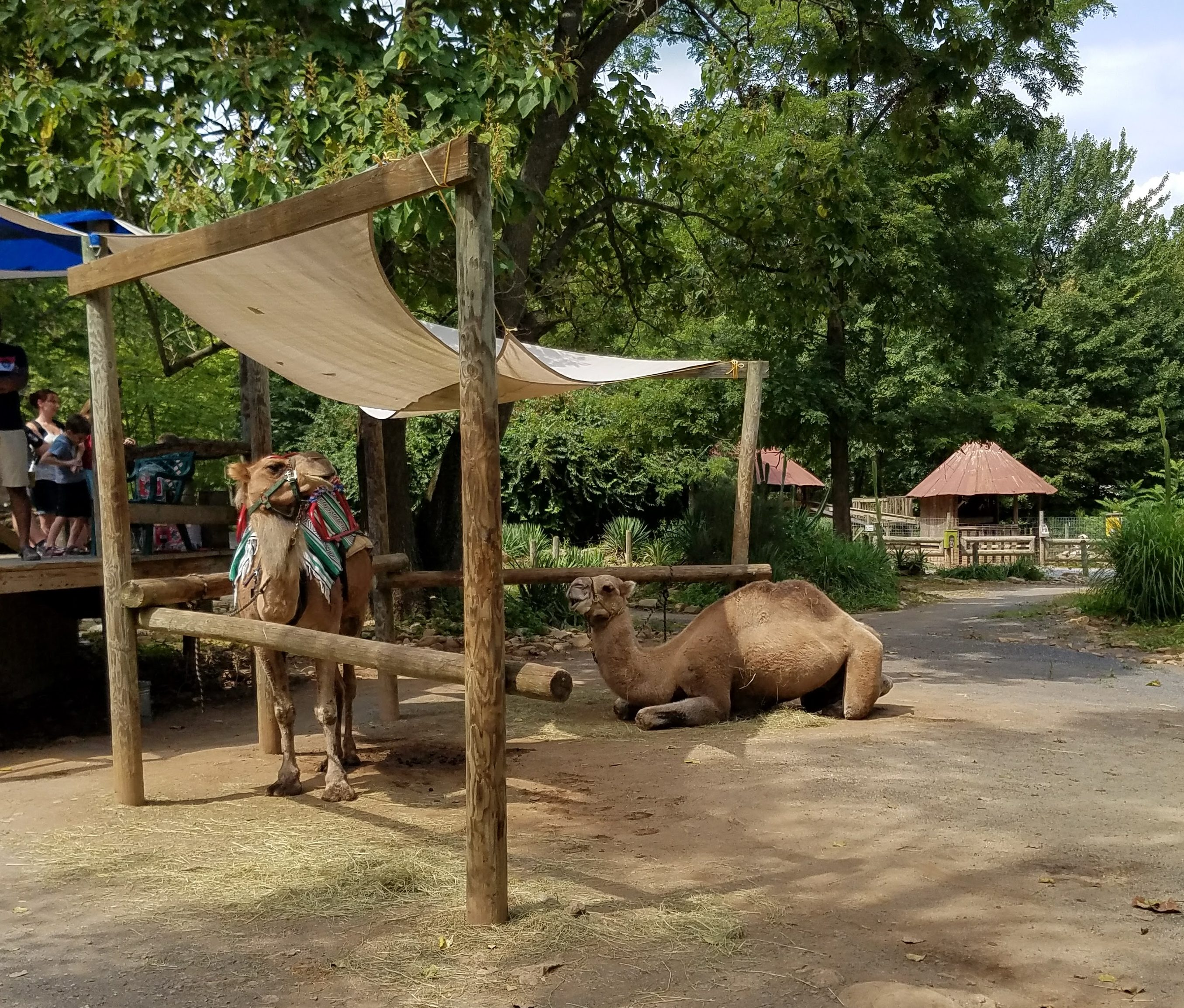Our Last Minute Road Trip To Catoctin Zoo | Theresa\'s Reviews