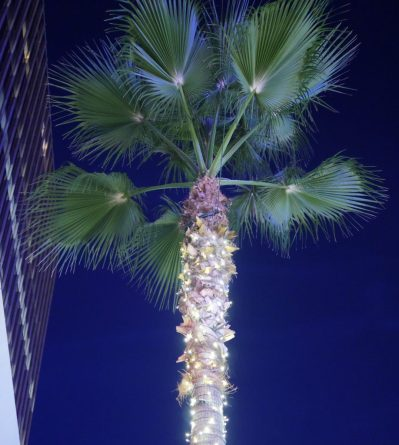 California palm tree - best local dishes