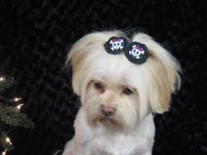 Hair bows for dogs!