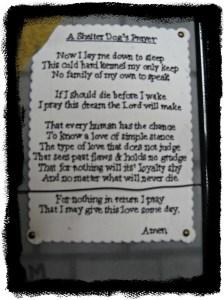 shelter prayer 003