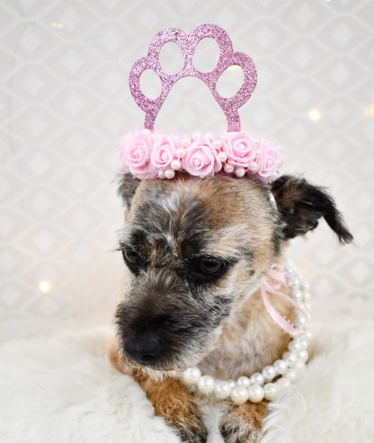 Pink Dog Paw Print Tiara, The Misfit Manor Shop