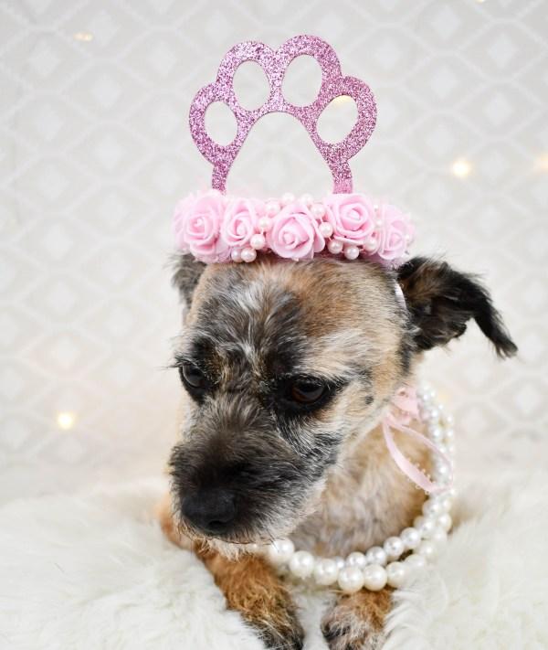 Pink Dog Paw Print Tiara, The Misfit Manor Shop