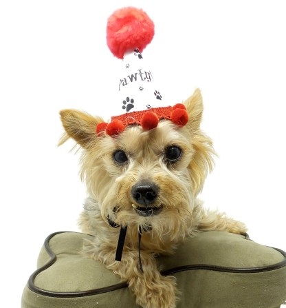 Dog Birthday Hat, Puppy Party, Misfit Manor Shop, Dog Party Favors, Paw Print Party Favors