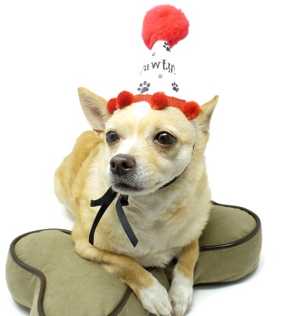 Dog Birthday Party, Dog Birthday Hat, Puppy Party, Misfit Manor Shop, Paw Print Party Favors