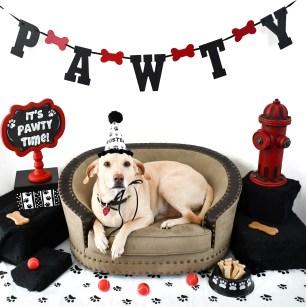 Custom Dog Birthday Hat, Dog Party Hat, Personalized Dog Birthday Hat, Dog Party Favors, Paw Print Party Favors, Misfit Manor Shop